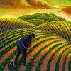 indian-agribusiness-540x540-tcm9-28841.jpg