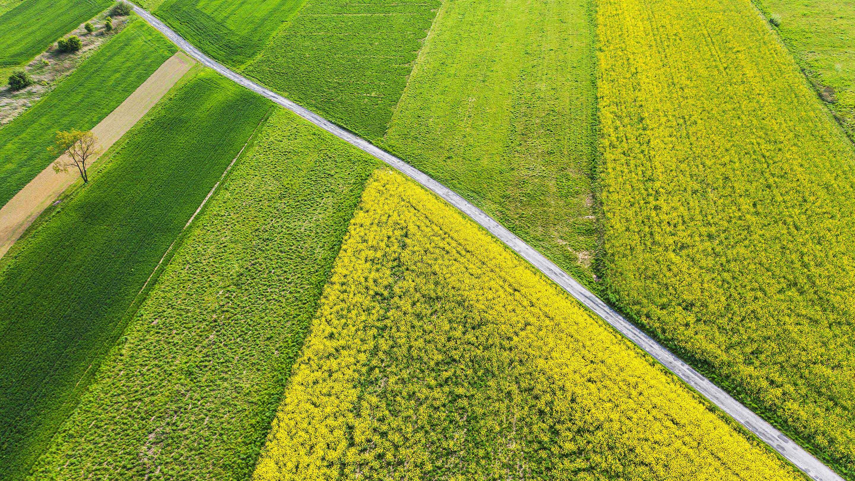 Biodiversity in Agriculture Makes Gains in the Boardroom - rectangle