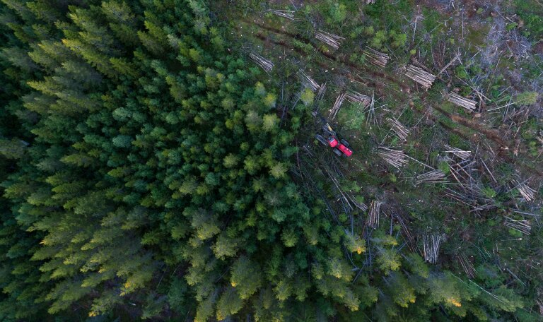 fight-against-deforestation-companies-must-take-control.jpg