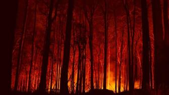 Fires, Forests, and the Future: A Crisis Raging Out of Control? - rectangle