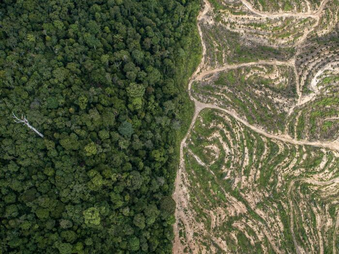 Deforestation & Conversation Free Supply Chain: A Guide for Action