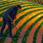 indian-agribusiness-1536x912-tcm9-28842.jpg